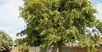 https://www.villageguide.co.nz/radius-peppertree-care-centre-3141