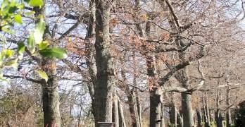 https://www.villageguide.co.nz/oakwoods-newly-refurbished-villas-2